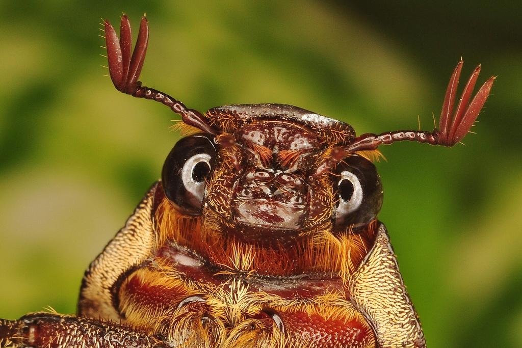 Майские жуки смешные картинки