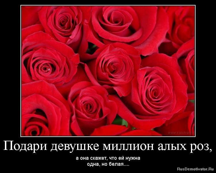 деформация стихи про миллион алых роз каждый дом